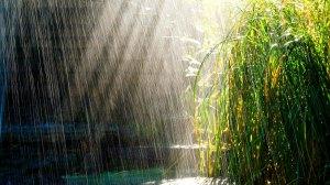 lluvia_en_el_bosque-1920x10802
