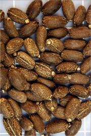 500888main_biofuels_seeds_lg