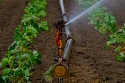 water-sprinklers-880970