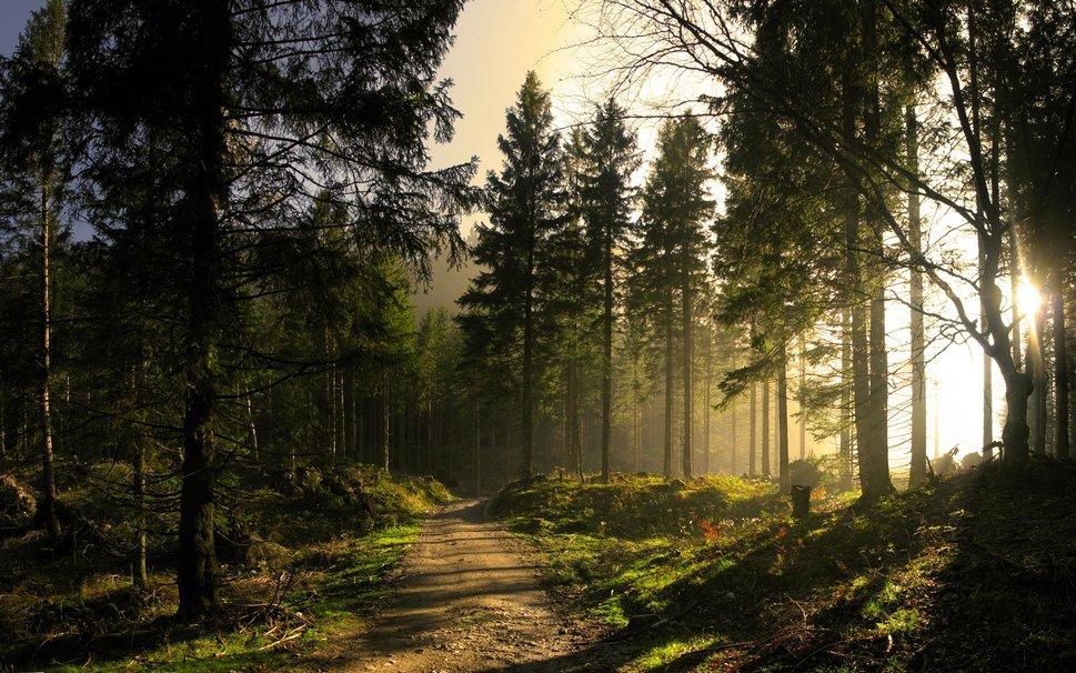 Bosques de Agua – agua&ambiente