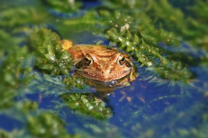 frog-870120_1920