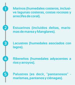 HUMEDAL 5 TIPOS DE ELEMENTOS