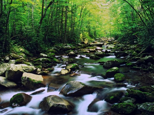 river-forest-stream-water-stones-moss-rocks-nature-scenery-trees-1024x768
