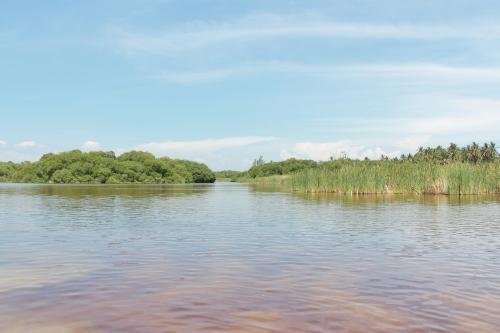 Estero Palo Verde, Laguna de Cuyutlán 3